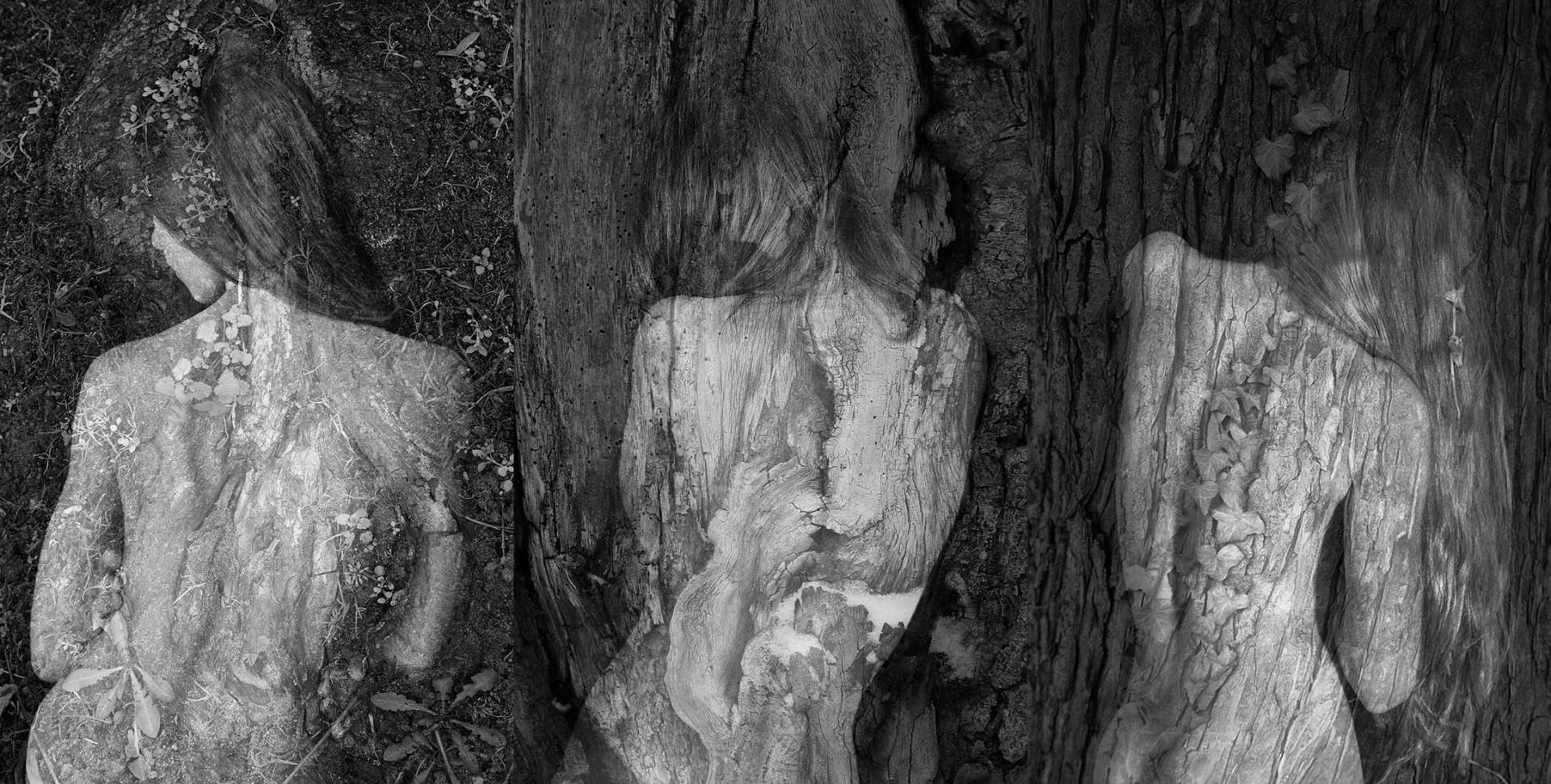 Arbor Essence